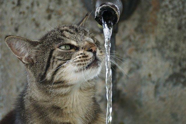 猫 お風呂