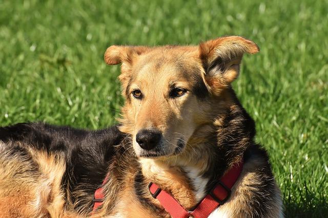 雑種犬 ミックス犬 違い