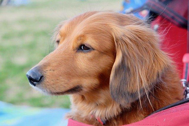 犬 エリザベスカラー